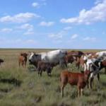 Grass-fed Beef lands